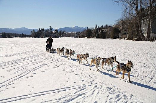 sled dogs Lake Placid